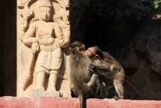 Monkeys playing