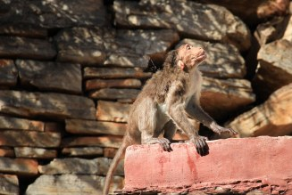 Monkey drying himself