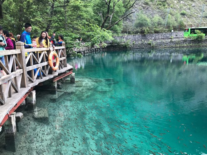 Panda Lake Jiuzhaigou